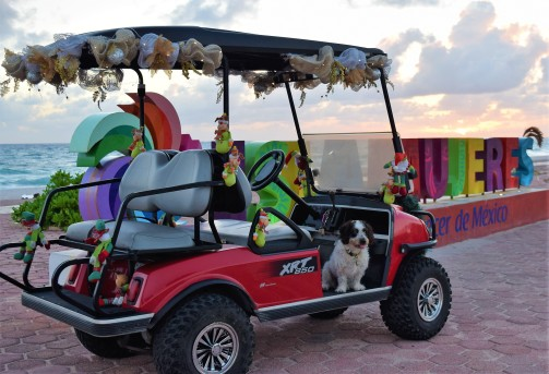 Sparky in golf cart after sunrise