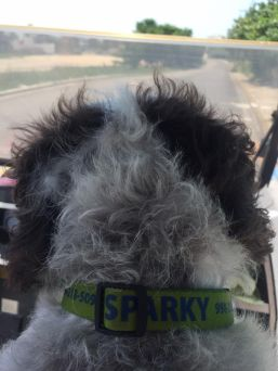 Sparky - heading out!