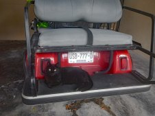 DSCN3189 Boo helping to decorate golf cart 2018