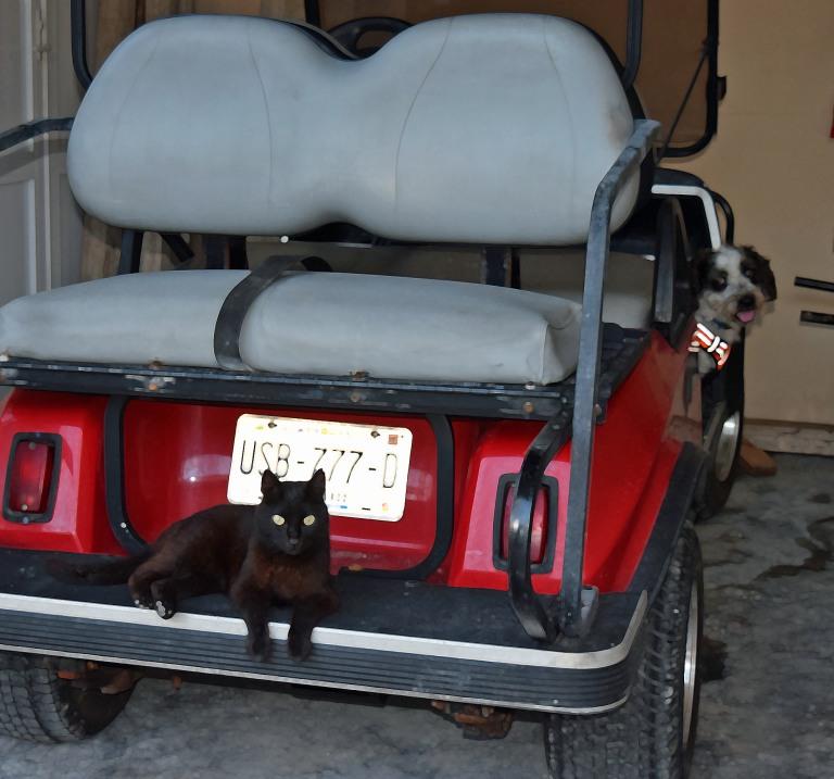 28-04 DSC_0008 Boo wants a golf cart ride